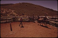 At the Oldlands' Summer Cow Camp, 15 Miles South of Their Piceance Creek Ranch. Three Generations of Oldlands Have Ranched Here. Roping Is an Essential Skill, 07-1973 (3815836062).jpg