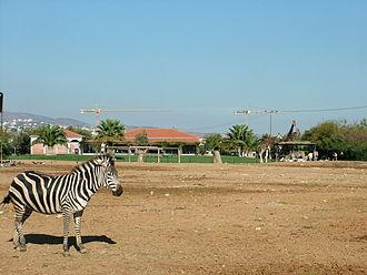 Attica Zoological Park - Attica Zoological Park