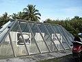 Atomic Bomb Pits - Tinian - panoramio (3).jpg