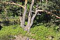 Auf der Nonnenfelsen im Zittauer Gebirge..2H1A1583WI.jpg