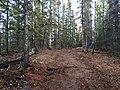 Auriol Trail (22500968456).jpg