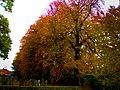 Autumn In The Churchyard Wilberfoss - geograph.org.uk - 1574613.jpg
