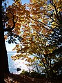Autumn Scene in Stanley Park - Vancouver - BC - Canada - 15 (37943438862) (2).jpg