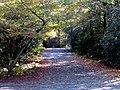 Autumn South Toe River Celo Camp NC 4304 (37894455766).jpg