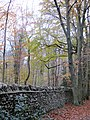 Autumn by the wall - November 2013 - panoramio.jpg
