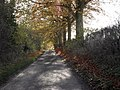 Autumn colour on a Cotswold country lane - geograph.org.uk - 1610038.jpg
