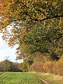 Autumn colours on woodland-field boundary - geograph.org.uk - 1586086.jpg
