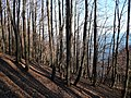 Autumn forest.Осенний лес. - panoramio.jpg