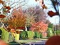 Autumn in Downside Road - geograph.org.uk - 600585.jpg