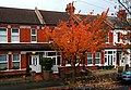 Autumn in Orchard Rd, SUTTON, Surrey, Greater London - Flickr - tonymonblat.jpg