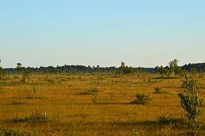Fen - Image: Avaste soo põhjaosa vaated (3)