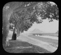 Avenue of acacia trees leading from Cairo to the Pyramids LCCN2004707596.tif