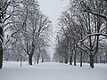 Avenue of fresh snow lined trees - geograph.org.uk - 1153645.jpg