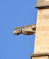 Avignon - Collégiale Saint Agricole 42.JPG