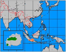 Mũi tên màu cam chỉ đến đảo Bawean. Green on inserted map highlights approximate range of Bawean deer on the island.