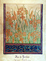 BAS DE PORTIÈRE - IRIS SELVAGENS-ESTUDO PARA TECIDO-GUACHE SOBRE PAPEL-61x47-c.1901-MUSEU NACIONAL DE BELAS ARTES-RJ.jpg