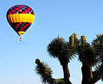 Balloon and Joshua Tree (2407296957).jpg