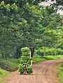 Banana Bike, Uganda (15527785217).jpg