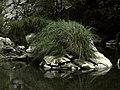 Banat,Nera Canyon - panoramio (57).jpg
