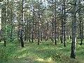 Baranivskyi Forest1.jpg