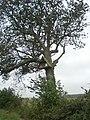 Barn owl nesting box, Jack's Lane - geograph.org.uk - 532504.jpg