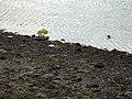 Beach, Lochgoilhead. - geograph.org.uk - 150579.jpg