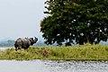 Beauty of Kaziranga National Park.jpg