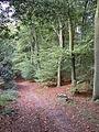 Beech trees at Trellech Common - geograph.org.uk - 261130.jpg