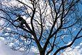 Ben Salter, tree surgeon (11083310774).jpg