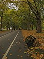 Bench, Hyde Park in Autumn 5146065000.jpg