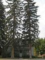 Benjamin Young house trees.JPG
