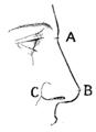 Bertillon - Identification anthropométrique (1893) 155 n&b.png