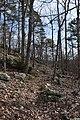 Big Hill Pond State Park Trail 5.jpg