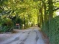 Bilton-Lime Tree Avenue - geograph.org.uk - 36195.jpg