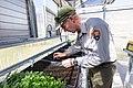 Biotech Sam Reid transplanting seed sprouts (48015872641).jpg