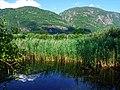 Biotope Lake of Gargazzone - Photo by Giovanni Ussi - Lake and surrounding vegetation (101) 29.jpg