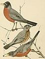 Bird lore (1907) (14568968039).jpg