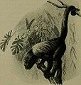 Bird lore (1914) (14569126090).jpg