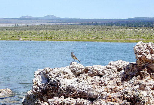 Bird on tufa at Mono Lake-1000px