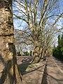Bishops Park, Fulham - geograph.org.uk - 1972383.jpg