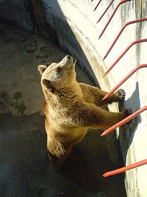 Bitola Zoo