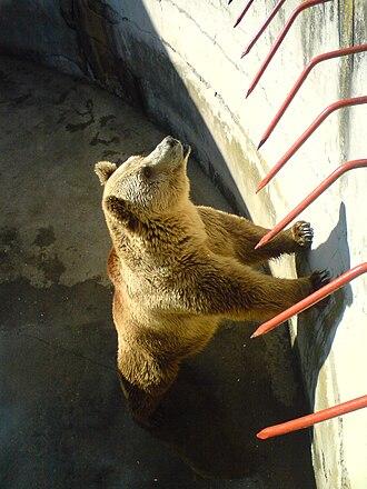 Bitola Zoo - Image: Bitola Zoo Bear