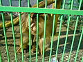 Bitola Zoo Monkey 2.JPG