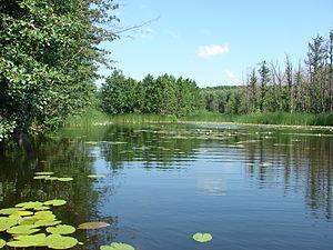 Bityug River - The Bityug River