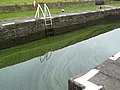Blue-Green Algae - geograph.org.uk - 1594938.jpg