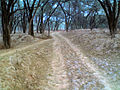 Blue Forest - panoramio.jpg