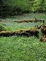 Bluebells and fallen trees - geograph.org.uk - 794898.jpg