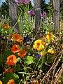 Blumen am Gartenzaun – Arboretum Ellerhoop 5.jpg