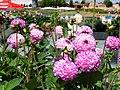 Blumenpracht & Farbenpracht.jpg