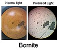 Bornite (Normal and Polarized light).jpg